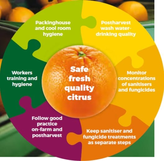 Pack house hygiene: sanitation and food safety - Citrus